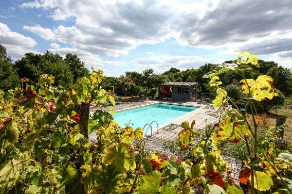 Vigne et piscine au Domaine de L'Ô - Dordogne